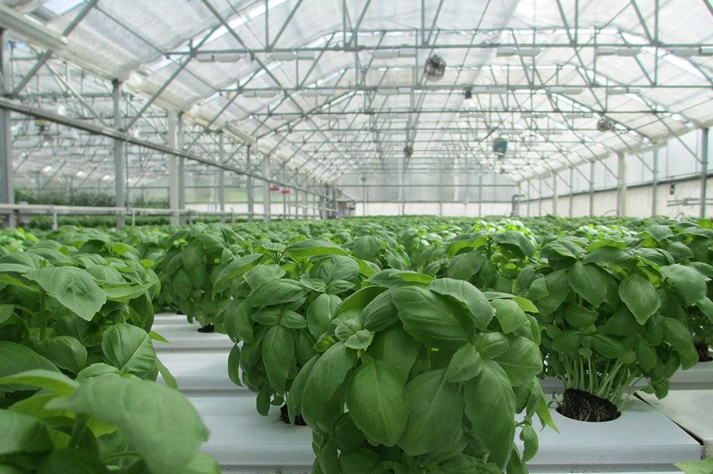 Propolis-in-der-Landwirtschaft _naturius-propolis